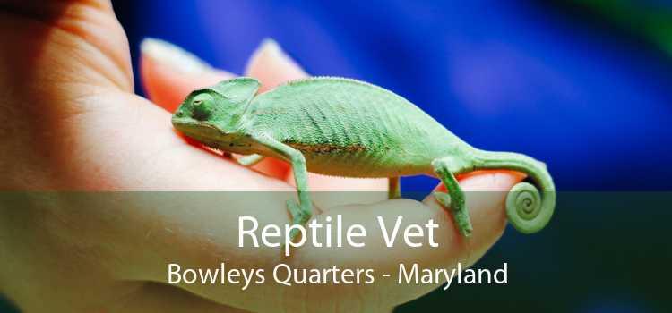 Reptile Vet Bowleys Quarters - Maryland