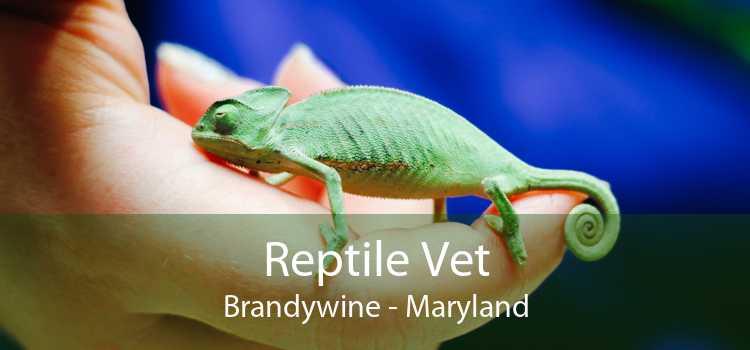 Reptile Vet Brandywine - Maryland