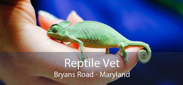 Reptile Vet Bryans Road - Maryland