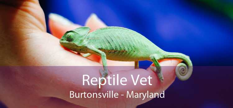 Reptile Vet Burtonsville - Maryland