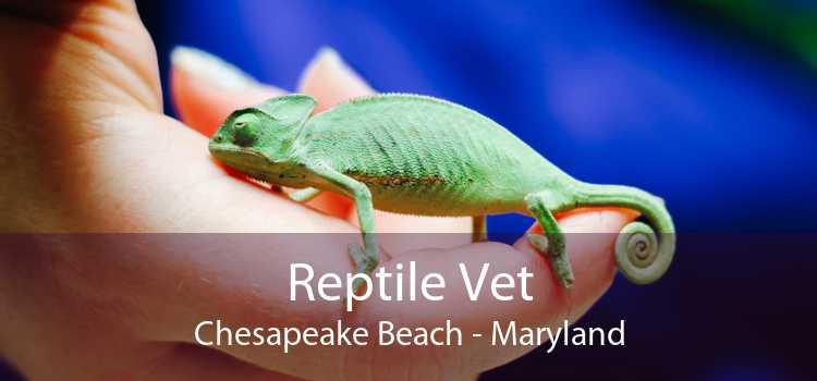 Reptile Vet Chesapeake Beach - Maryland