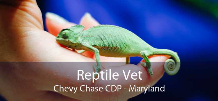 Reptile Vet Chevy Chase CDP - Maryland