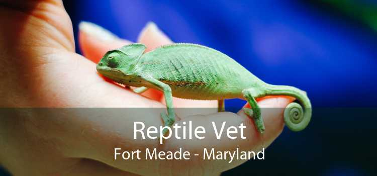 Reptile Vet Fort Meade - Maryland