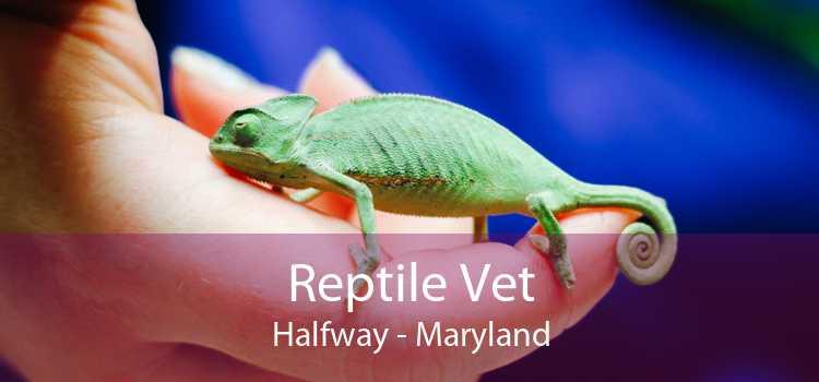 Reptile Vet Halfway - Maryland