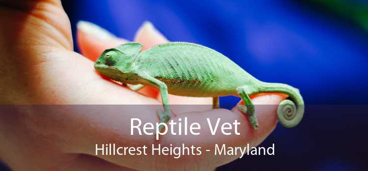 Reptile Vet Hillcrest Heights - Maryland