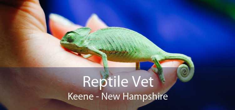 Reptile Vet Keene - New Hampshire