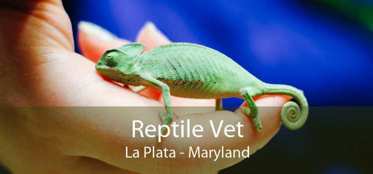 Reptile Vet La Plata - Maryland
