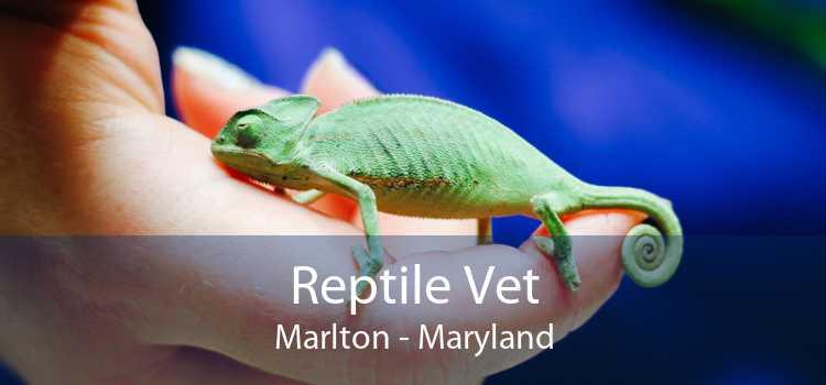 Reptile Vet Marlton - Maryland