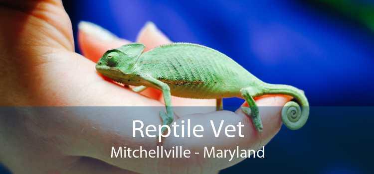 Reptile Vet Mitchellville - Maryland