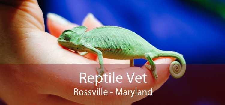 Reptile Vet Rossville - Maryland
