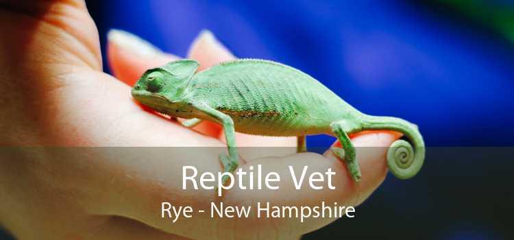 Reptile Vet Rye - New Hampshire