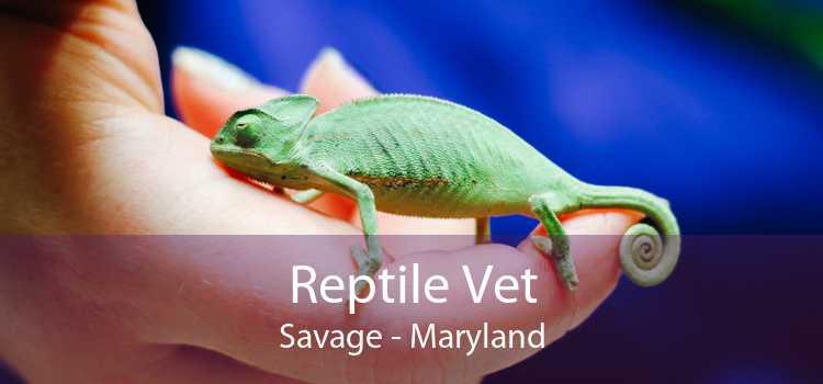 Reptile Vet Savage - Maryland