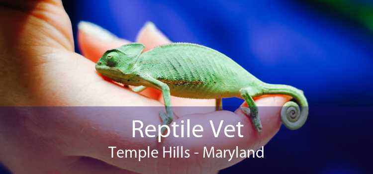 Reptile Vet Temple Hills - Maryland