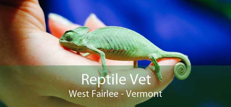 Reptile Vet West Fairlee - Vermont