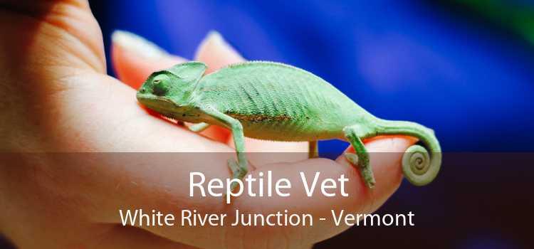 Reptile Vet White River Junction - Vermont