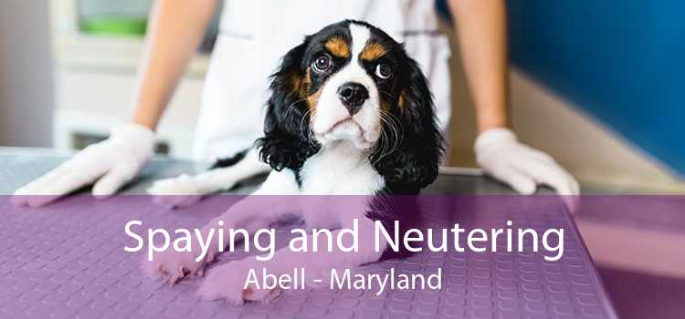 Spaying and Neutering Abell - Maryland