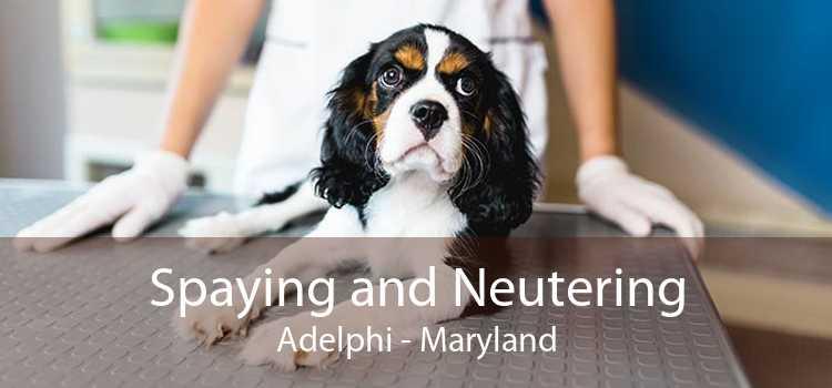 Spaying and Neutering Adelphi - Maryland