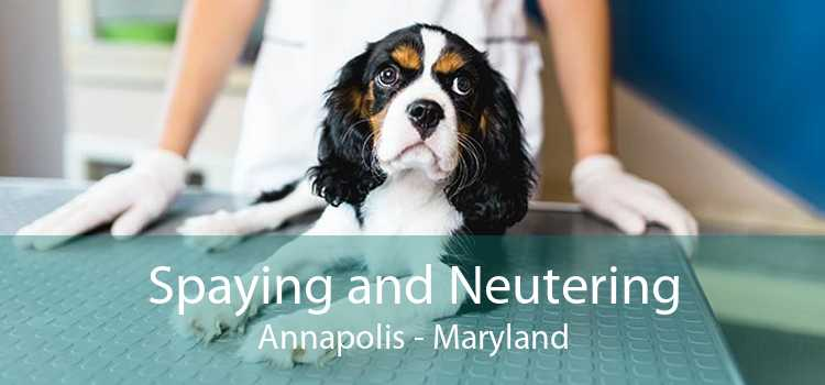 Spaying and Neutering Annapolis - Maryland