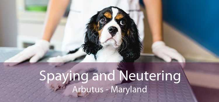 Spaying and Neutering Arbutus - Maryland