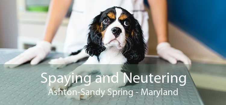 Spaying and Neutering Ashton-Sandy Spring - Maryland
