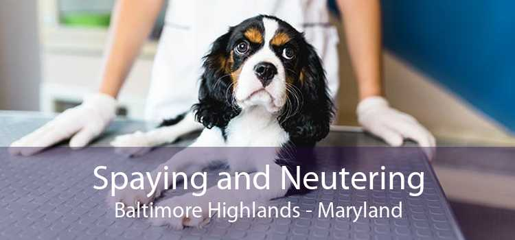 Spaying and Neutering Baltimore Highlands - Maryland