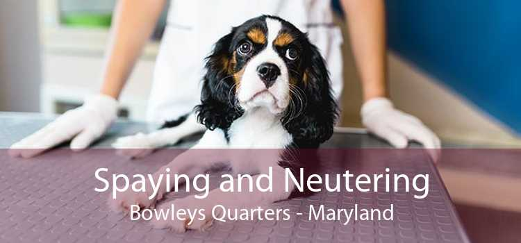 Spaying and Neutering Bowleys Quarters - Maryland