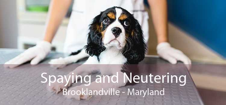 Spaying and Neutering Brooklandville - Maryland