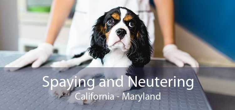 Spaying and Neutering California - Maryland