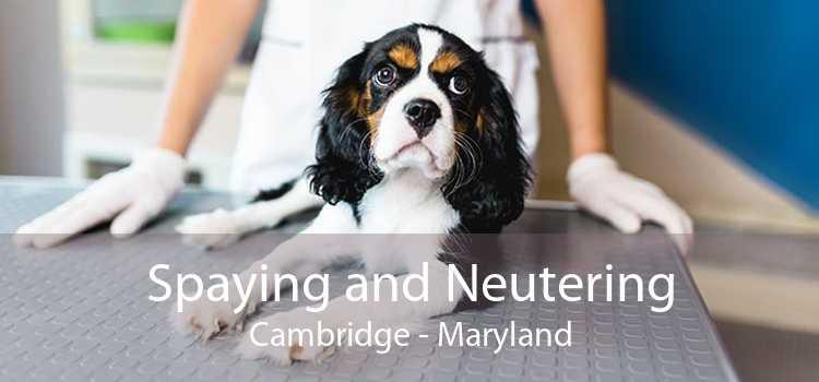 Spaying and Neutering Cambridge - Maryland