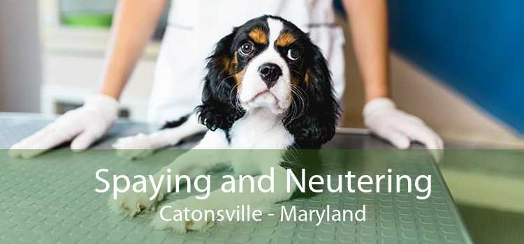 Spaying and Neutering Catonsville - Maryland