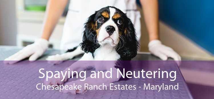 Spaying and Neutering Chesapeake Ranch Estates - Maryland