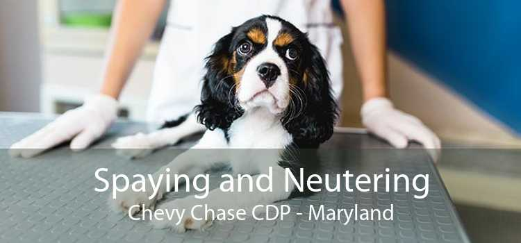 Spaying and Neutering Chevy Chase CDP - Maryland