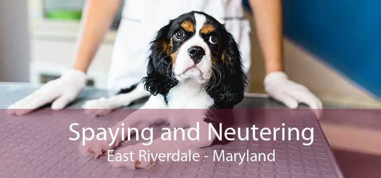 Spaying and Neutering East Riverdale - Maryland