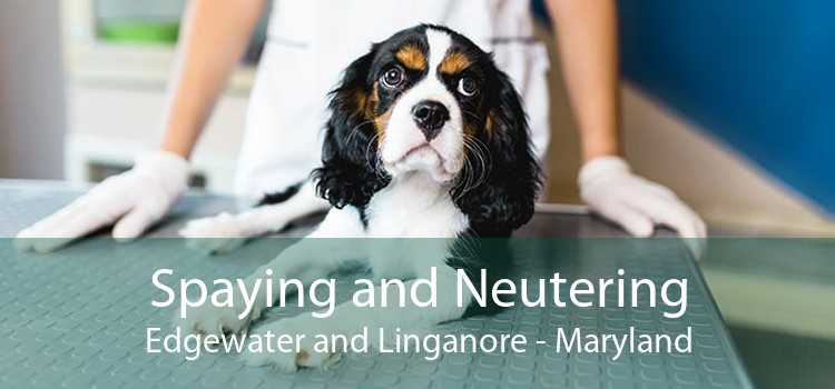 Spaying and Neutering Edgewater and Linganore - Maryland