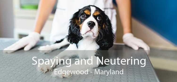 Spaying and Neutering Edgewood - Maryland
