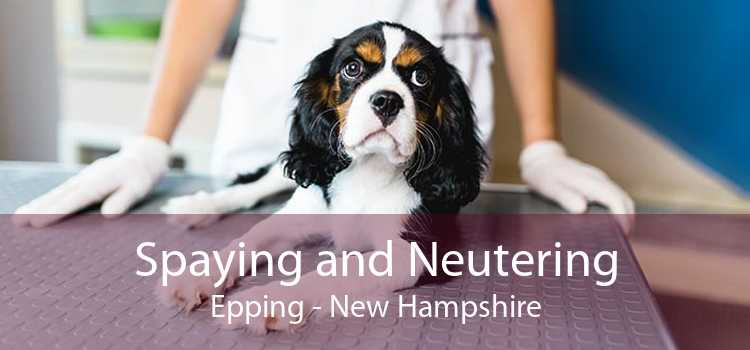 Spaying and Neutering Epping - New Hampshire