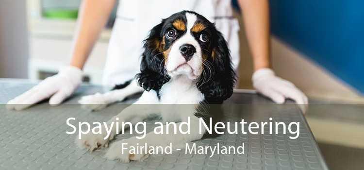 Spaying and Neutering Fairland - Maryland