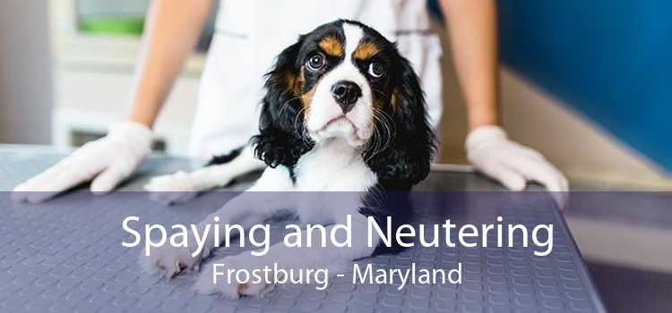 Spaying and Neutering Frostburg - Maryland