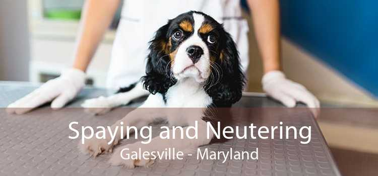 Spaying and Neutering Galesville - Maryland