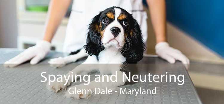 Spaying and Neutering Glenn Dale - Maryland