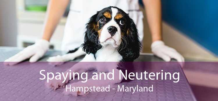 Spaying and Neutering Hampstead - Maryland