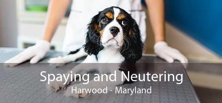 Spaying and Neutering Harwood - Maryland