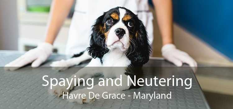 Spaying and Neutering Havre De Grace - Maryland