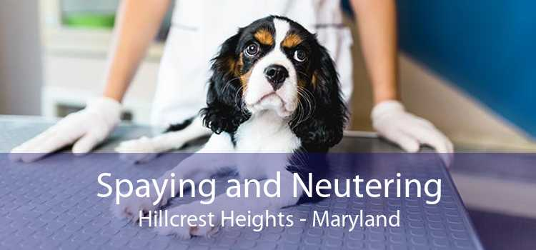 Spaying and Neutering Hillcrest Heights - Maryland