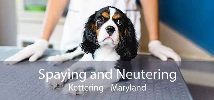 Spaying and Neutering Kettering - Maryland
