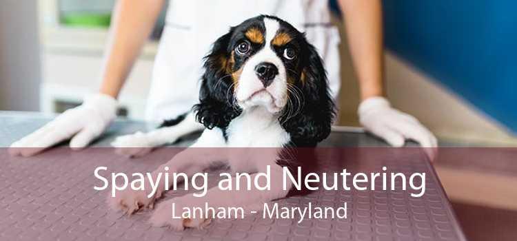 Spaying and Neutering Lanham - Maryland