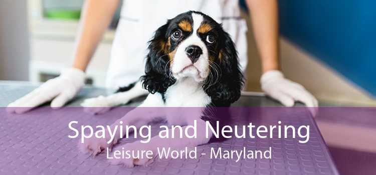 Spaying and Neutering Leisure World - Maryland