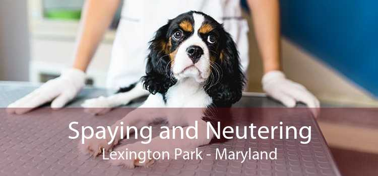 Spaying and Neutering Lexington Park - Maryland