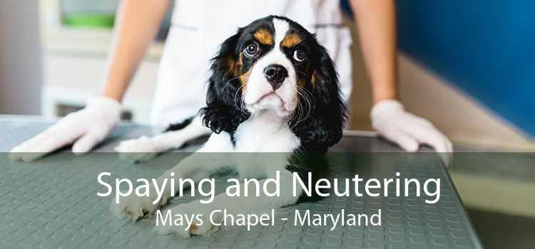 Spaying and Neutering Mays Chapel - Maryland