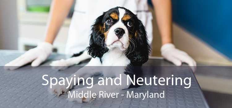 Spaying and Neutering Middle River - Maryland